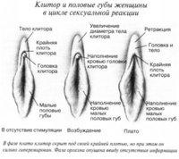 clitoris3.jpg