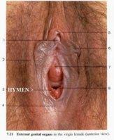 hymen4.jpg