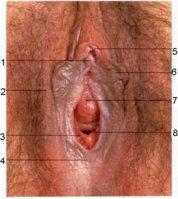 vulva_foto.jpg