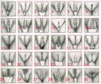 Vulva_Chart.png